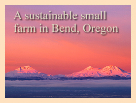 A sustainable small farm in Bend, Oregon